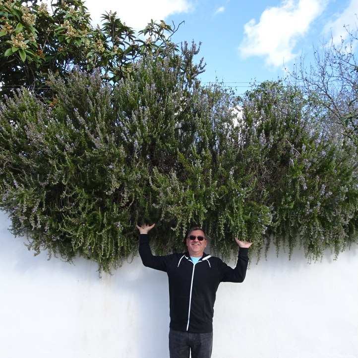 Now that's a bush of rosemary.........I can taste the lamb!!