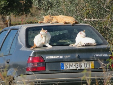 Cat car heaven. The heat from the sun warming the car and then the natural instinct of cats finding a pool of sunshine to soak in.