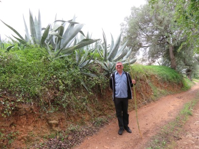 Look at the size of those aloe vera!