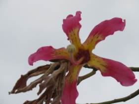 This blossom is gorgeous but very high up. It was challenging to get the photo hence the tiny blurring.