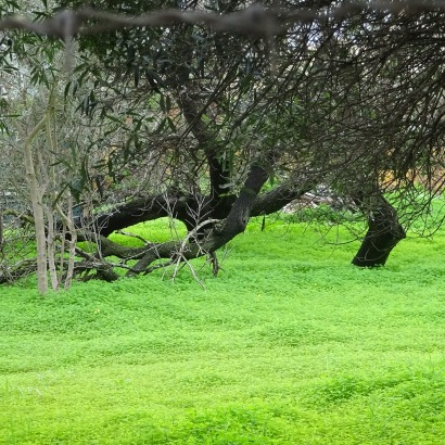 Un tapis de vert ... tranquille