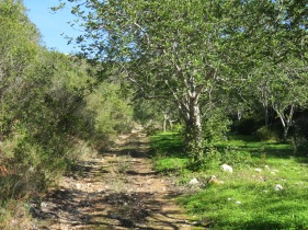 I saw this trail from my vantage point and went to find it when I climbed down, this will be my trail for tomorrow.