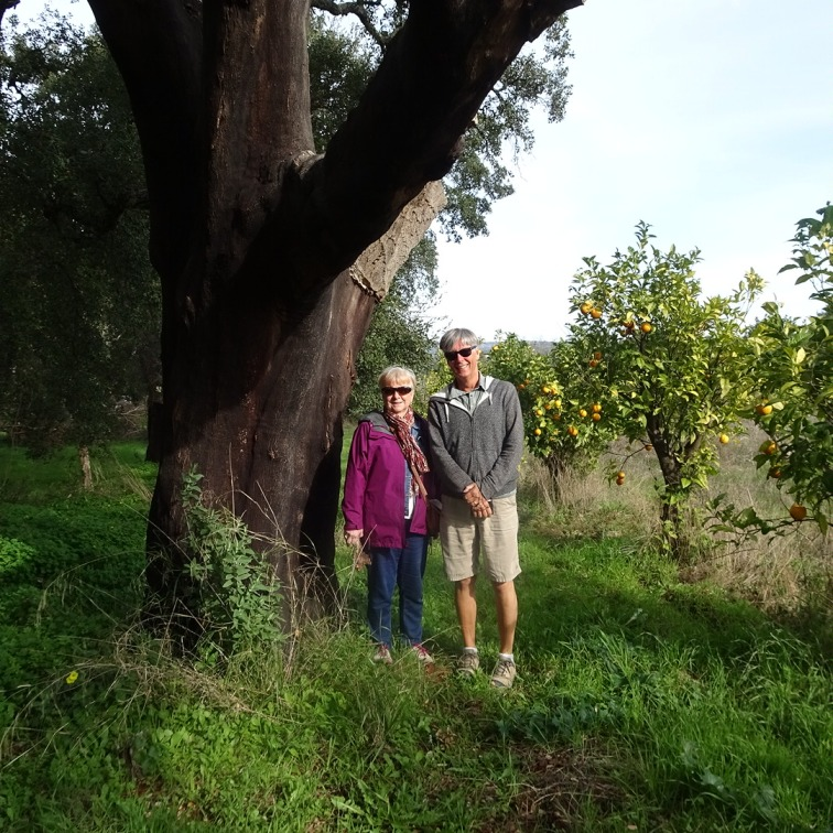 In the cork forest right beside an orange orchard.