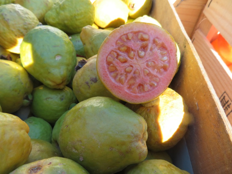 Beautiful fresh guava...the scent was amazing.