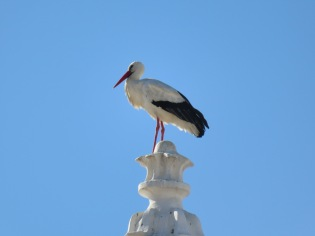 Posing on the church steeple just for me!!