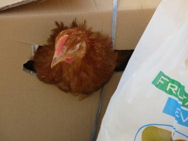 Chicken in a box!