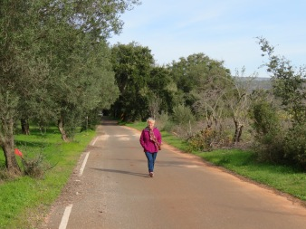Walking along the road in the middle of the cork forest. In awe!