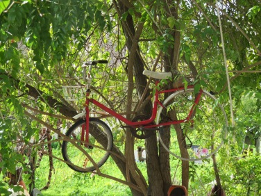 OK, so just how did that bike get up the tree?