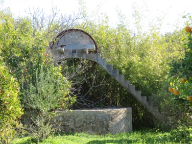 An old water wheel in the middle of what appeared to be an abandoned orange grove