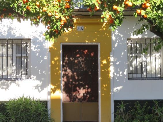 Orange trees line practically every street in Seville.