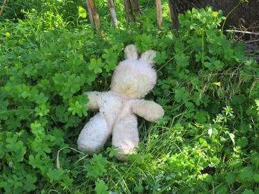 Somebody killed a bear in the woods!!!!!!!!!!!!!1 An albino at that!
