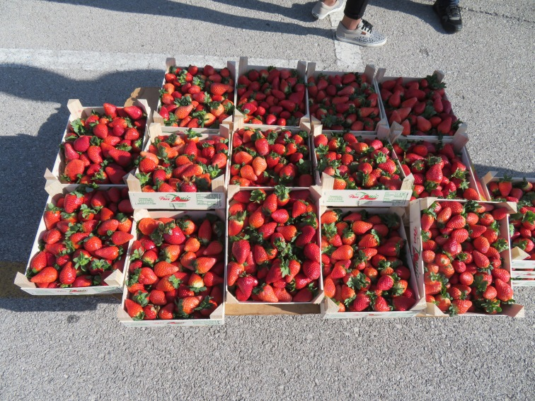Sweet smelling baskets of strawberries were available in abundance today.