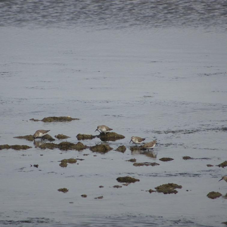 Sea birds galore