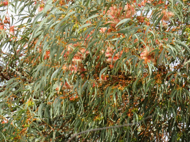 This particular tree has all the new growth coming in in a reddish colour. Looks like a painting to me.