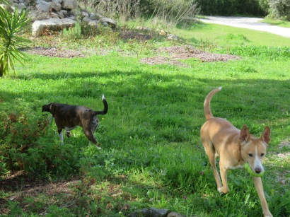 Two of their dogs......playful and well behaved.