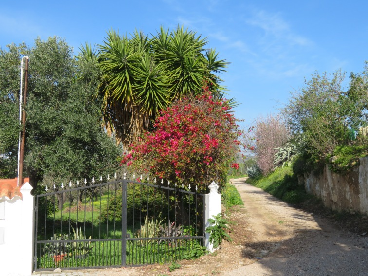 This is the entrance to our driveway, which for some reason, caught my eye today as looking rather inviting and the colours beautiful against the blue sky.