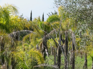 I took another side road and came upon a huge property covered in various sorts of palm trees in every size imaginable. It seemed to have been abandoned.