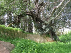 This old tree and embankment looks as if they have many stories to tell.