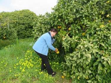 Hereis Diane, in her glory picking grapefruit for her breakfast in the morning