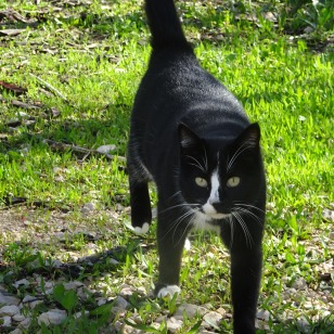 Their cat,who is very affectionate and what lovely whiskers!