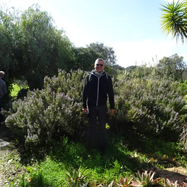 Marc admiring a patch of rosemary in their garden.....planted from a single stem!!