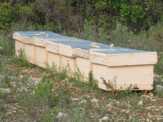 These hives are surrounded by wild lavender bushes. If you look closely you can see the bees at work.