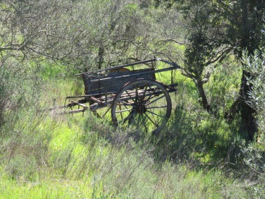 This old farm wagon was tucked away in an olive orchard