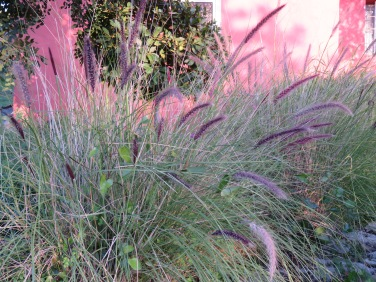 These grasses were the must sublime colour.