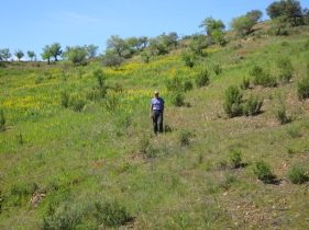Me in the lupin patch.