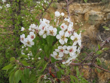 A lovely flowering tree on the mountain.