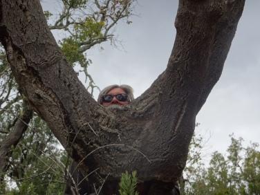 A monkey in a cork tree!!