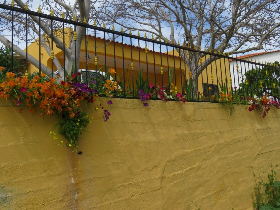 A wall cascading with every colour of freesia.