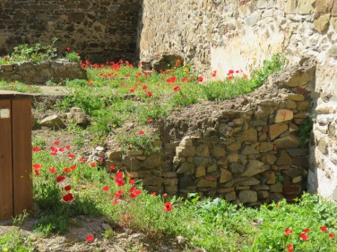 Poppies have taken over the inside of the castle walls.
