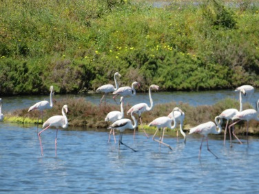 More flamings...they shy away from the shore as I biked by and watched me with much suspicion