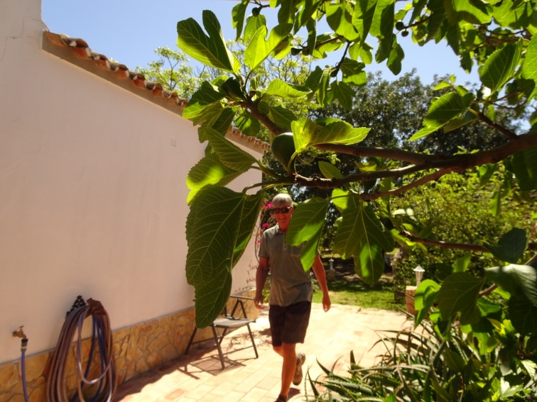 Me and fig tree beside our kitchen door.
