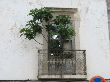 I loved this old fig tree growing out of this broken window on the second floor of an empty, at least I hope it is empty, home!