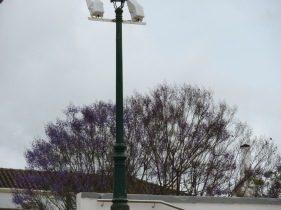 Another jacaranda, this one taken while we ate lunch at Ana's.
