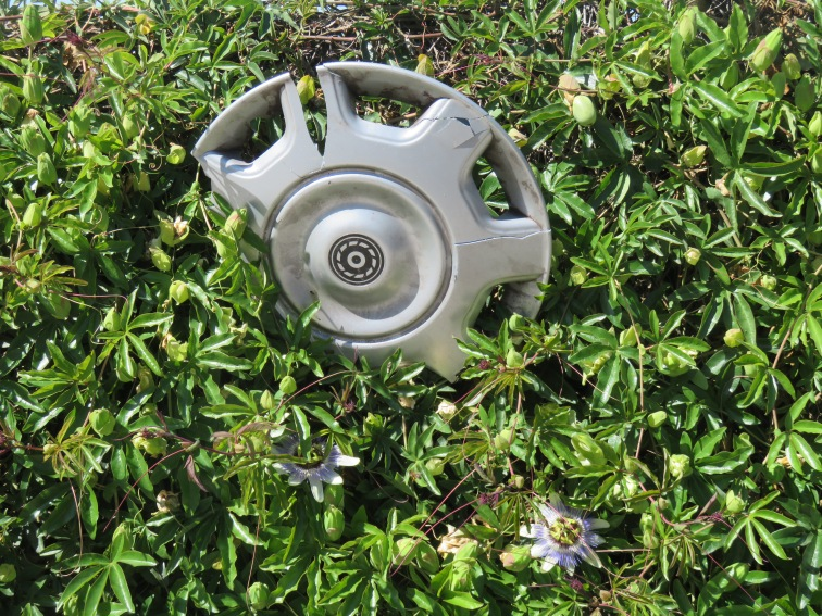 Hub caps and passion flowers growing in the hedge!!!