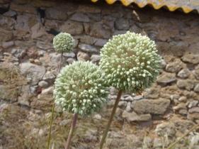 BEautiful local flora.
