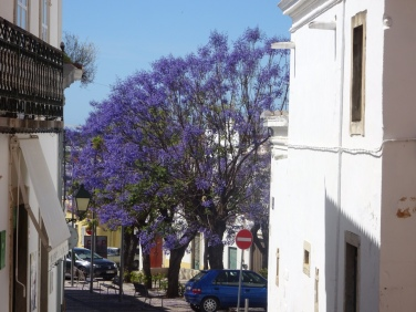 Another jacaranda tree.....I never tire of seeing them.